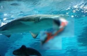 サメ に 食べ られる 夢